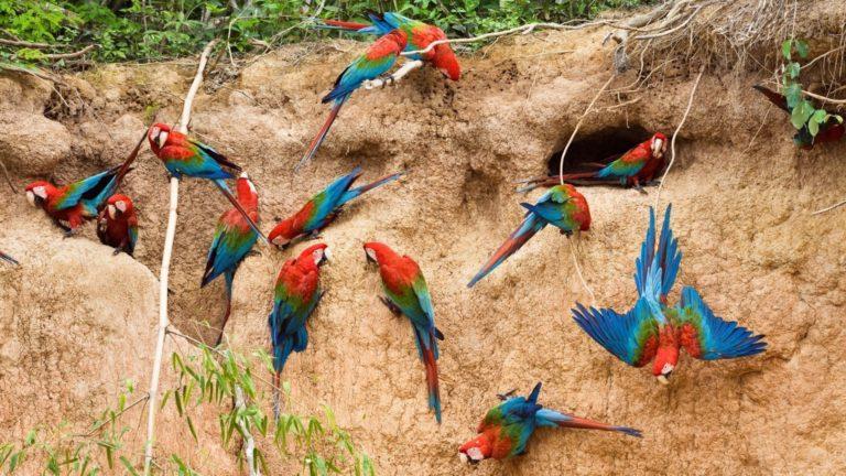 riserva-nazionale-di-Tambopata-Peru-768x432